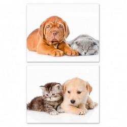 Cuadro Lienzo x2 Puppies 50 cm