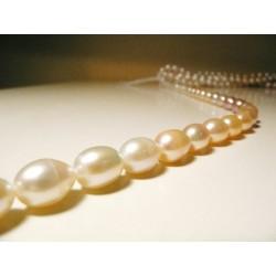 Tira de Collar Perla Cultivadamix color40cm oval8mm x 12mm