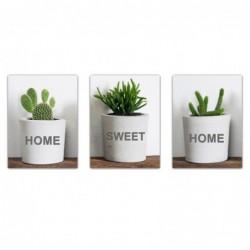 Cuadro Decorativo x3 Cactus 30x40 cm