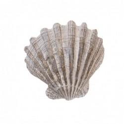 Figura Decorativa Concha de Mar Resina Blanco 10 cm