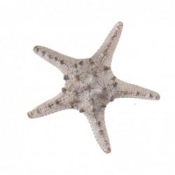 Figura Decorativa Estrella de Mar Resina Blanco 11 cm